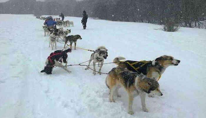 Viajar en un trineo de perros, un regalo del cielo